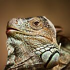 Iguana by Scott Carr