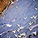 Seagulls school... by Kornrawiee