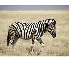 Pretty Zebra Photographic Print