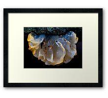 Jelly fungi Framed Print
