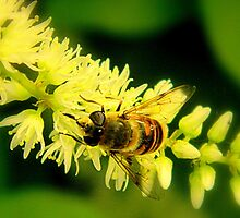 Busy Buzzy Bee  ^ by ctheworld