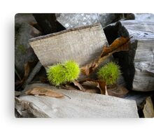 Angular wood blocks with Conkers Canvas Print