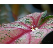 Droplet Photographic Print