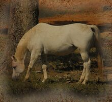 Little White Miss Grazing by Sharksladie