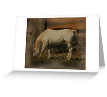 Little White Miss Grazing Greeting Card