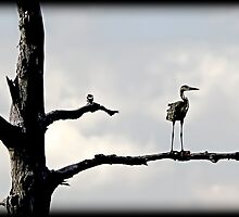 Eye on The Everglades by JKKimball
