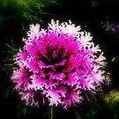 """""""Ornamental Cabbage"""" by Lynn Bawden"""