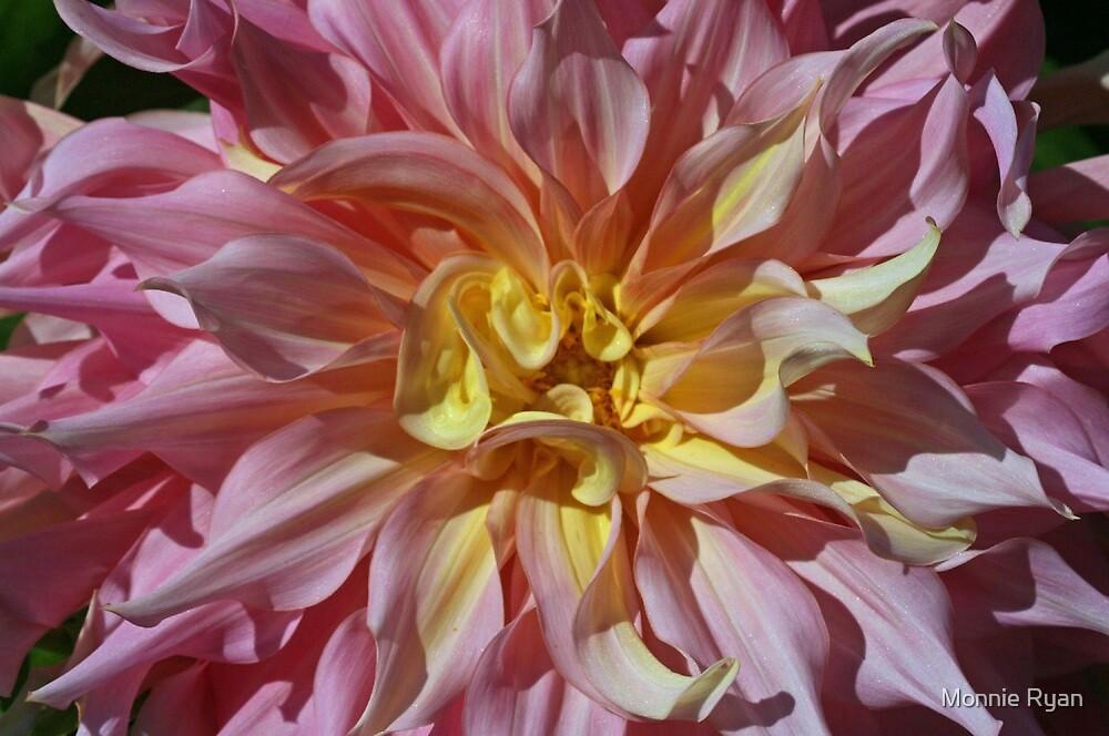 Blast of Pink by Monnie Ryan