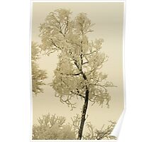 The Power of Touch, Montana trees in winter Poster