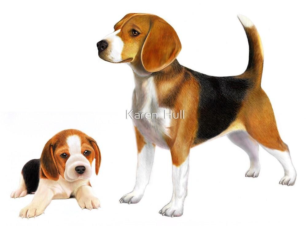 Beagle by Karen  Hull