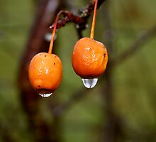 Drops from fruit  by anihaa