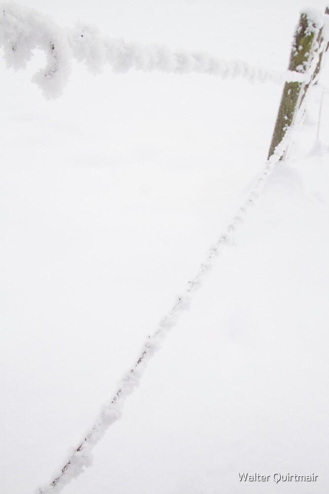 Frozen Wire by Walter Quirtmair