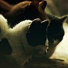 Top Cats - part I by aciddream