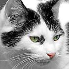 Beautiful Cat by simpsonvisuals