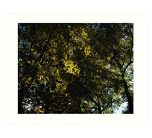 Autumn Leaves in the Sky Art Print