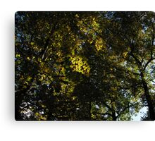 Autumn Leaves in the Sky Canvas Print