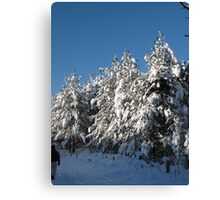 winter wonderland national trust formby Canvas Print