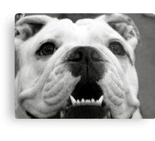 Butch the Bulldog Metal Print