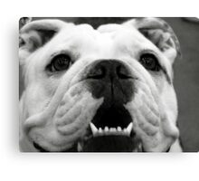 Butch the Bulldog Canvas Print