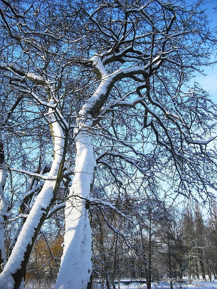 Snowy trees by Stephanie Owen