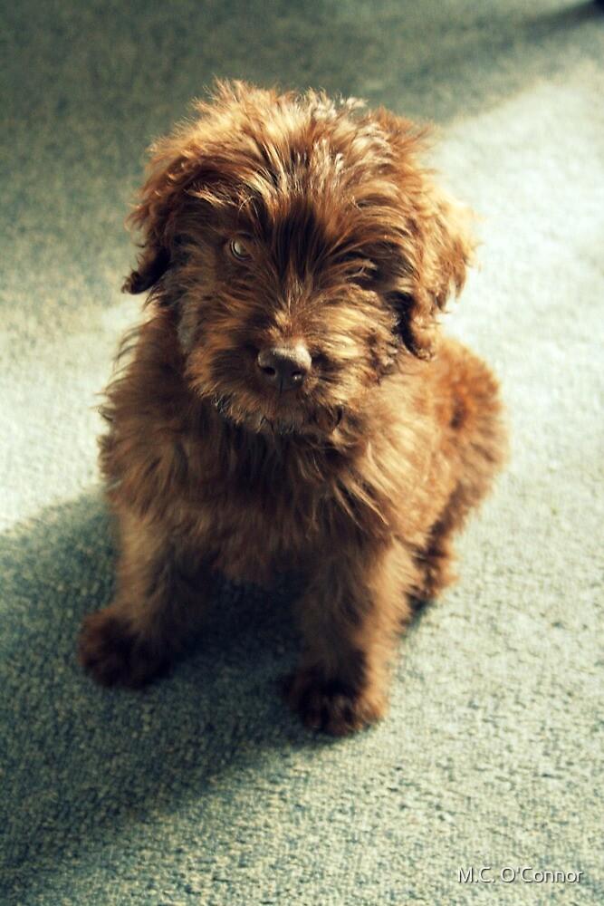 Mulligan ~ Puppy Portrait by M.C. O'Connor