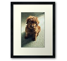 Mulligan ~ Puppy Portrait Framed Print