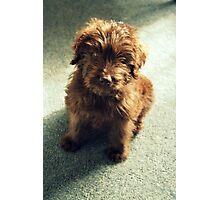 Mulligan ~ Puppy Portrait Photographic Print