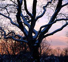 Snowy sunset scene by Stephanie Owen
