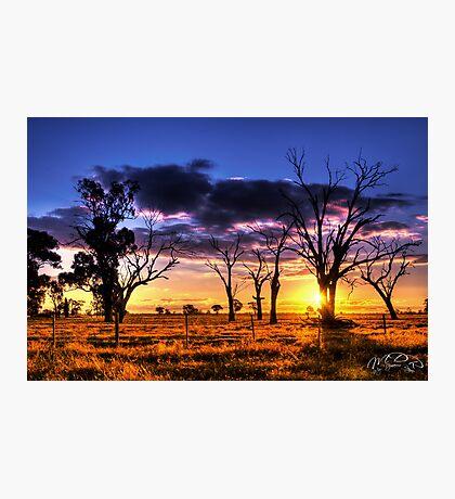 Bush Sunset Photographic Print