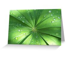 Lupin Leaves in the rain Greeting Card