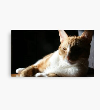 Sly kitten Canvas Print