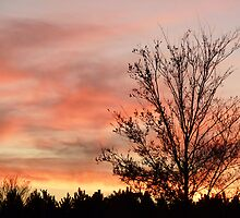 Sunset with a Tree by Caren