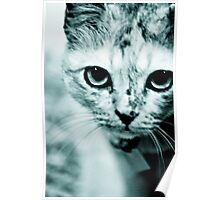 Meow....where are you mommy? : On Featured Work Poster