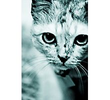 Meow....where are you mommy? : On Featured Work Photographic Print