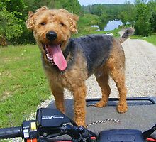 "Tucker""s Favorite Ride by barnsis"