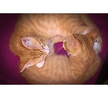 Circle of Kitten Photographic Print