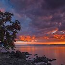 Pohutukawa Sunset by Paul Mercer
