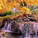 Waterfall @ Chicago Botanic Garden by dandefensor