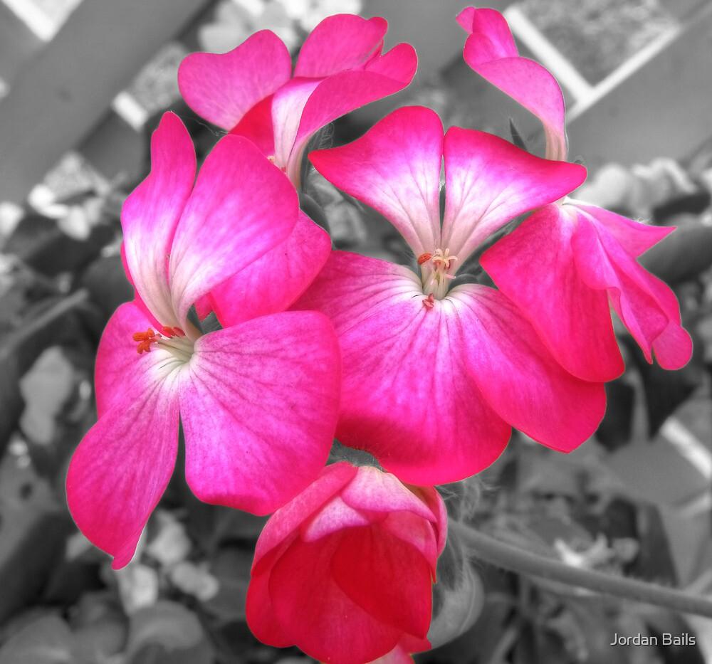 simply pink by Jordan Bails