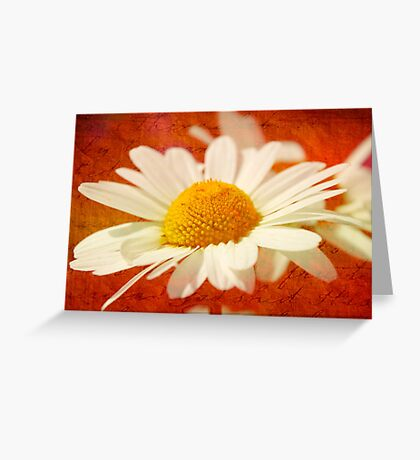 Daisy and Script Greeting Card