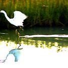 Egret Skimmer by dandefensor