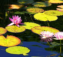 Waterlilies - Chicago Botanic Garden by dandefensor