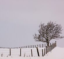 A Fence And A Tree by Lynne Morris