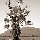 The Cazneaux Tree by Cathie Tranent