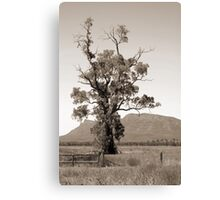 The Cazneaux Tree Canvas Print