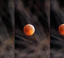Lunar Eclipse 2010 by Michael Garrison