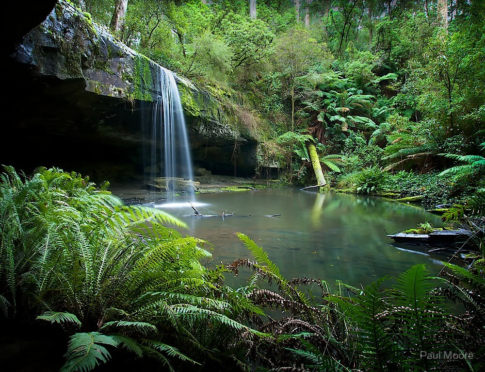 A wet day in the Otways by Paul Moore