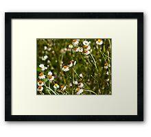 Flowers of Bateman's Bay Framed Print