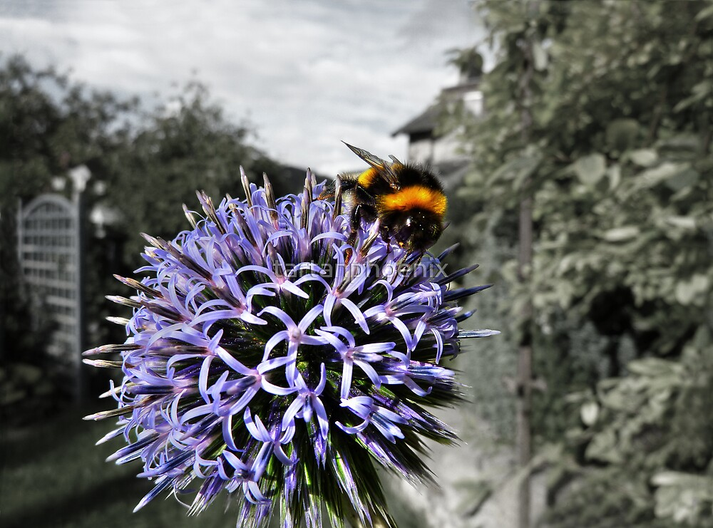 Bumble Bee on Globe Thistle by tartanphoenix
