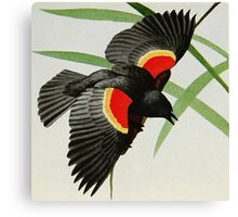 Red-winged Blackbird image illustration, 1919 Canvas Print